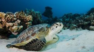 Jamaica duiken